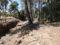 Ecologistes de Catalunya denuncia una tala al torrent de Sant Marc