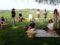 Pícnics entre vinyes per celebrar l'inici de la verema al Penedès